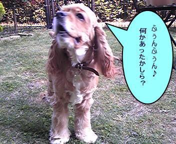 2008429-3.jpg