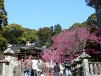 200803静岡15