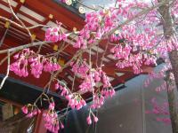 200803静岡16