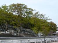 群馬・栃木46
