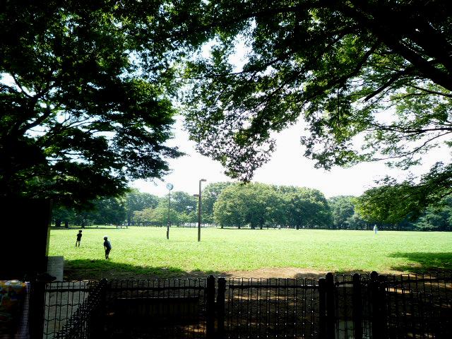 代々木公園芝生全景