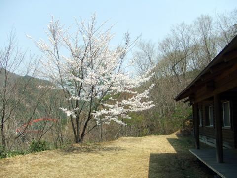 スタジオ桜