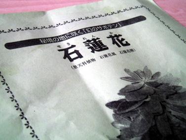 石蓮花チラシ
