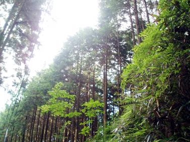 高野山01