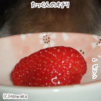 イチゴ・・・おいてけぼり・・・