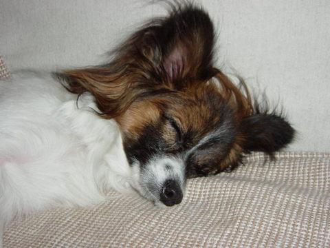 天使の寝顔①