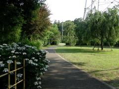 アジサイの咲く小道