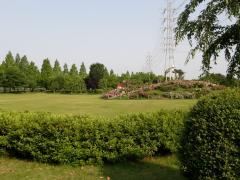 バラも咲く芝生の広場