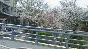sakura-ogawa.jpg