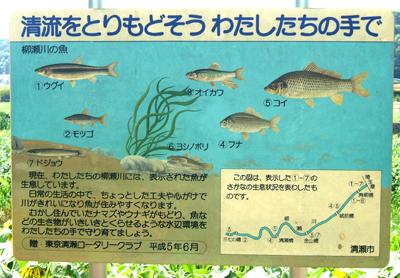 柳瀬川魚の看板