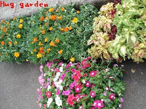 植えられる前の花たち