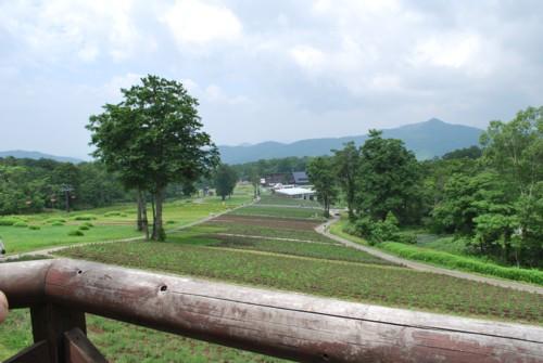 谷川岳連峰が見えます!!