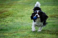 どこまでもボール追いかけるよ!!