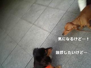 SBSH0014.jpg