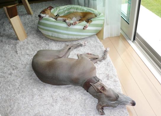 見た目は、ベッドより涼しくて快適そうなんですが。。