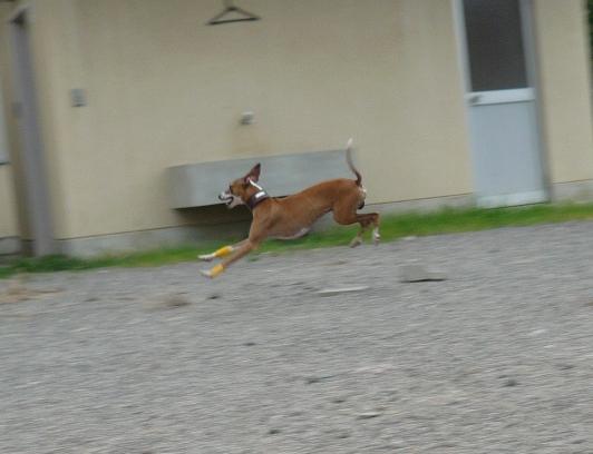 跳び犬ディオっち。 つーか、何だその走り方(苦笑