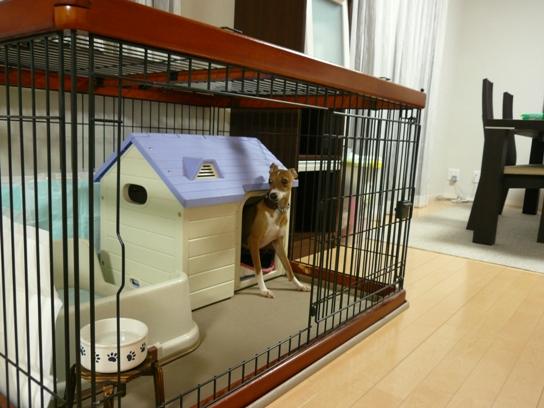 飼い主♂が居るので、ハウスへ避難
