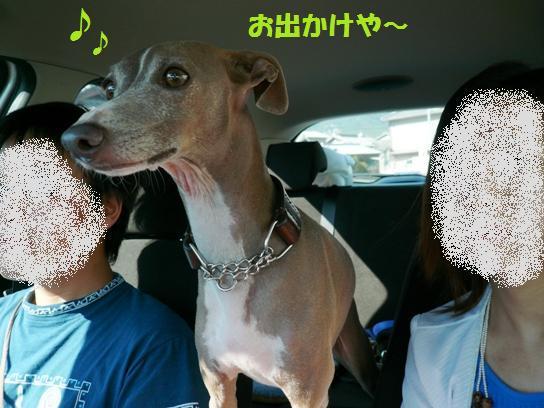 危ないので車内では犬をちゃんと固定しませう