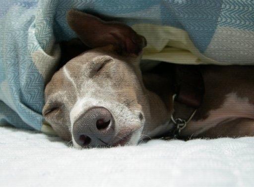 走ってないけど、満足そうに寝るトト