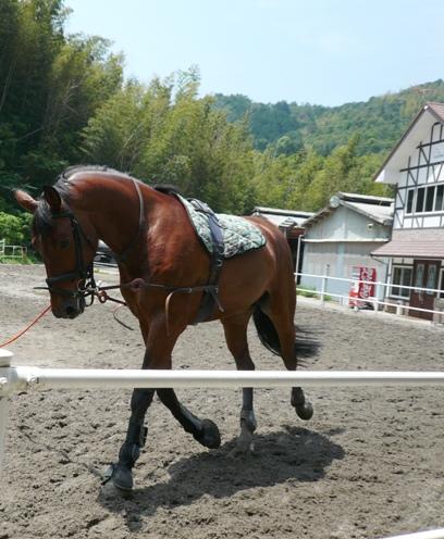調馬索(ちょうばさく)で調教中のお馬さん