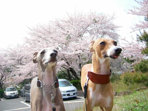 日本の春っ!