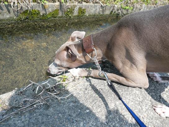 毎年のように水不足の香川と違い、徳島は水が豊富
