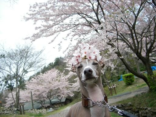 同じように頭に花を乗せても、トトはやっぱり雄に見えるわ