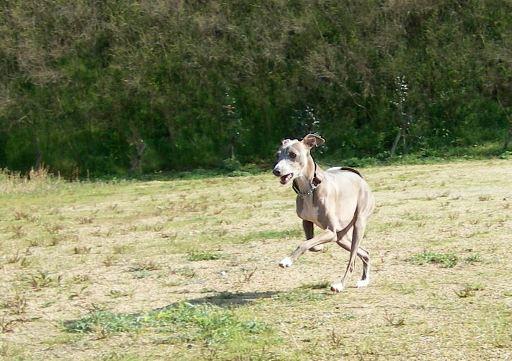 私が呼んだのに、あさっての方向へ走っている犬