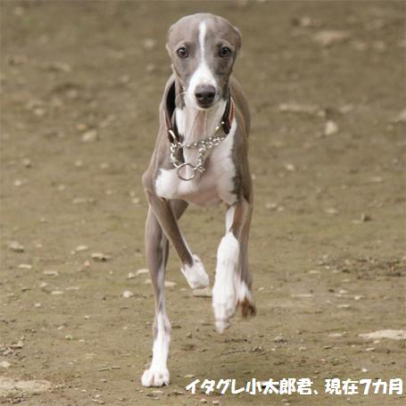 太郎さん、写真お借りしました。