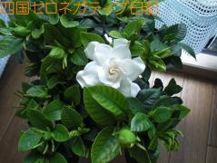 CIMG0178.jpg
