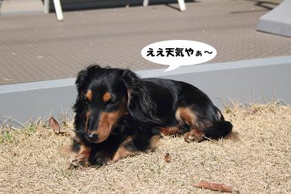 2008 03 15 お庭でひなたぼっこ blog04のコピー