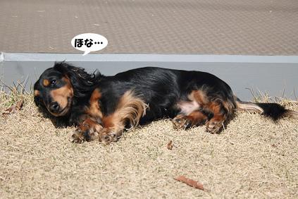 2008 03 15 お庭でひなたぼっこ blog06のコピー