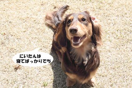 2008 03 15 お庭でひなたぼっこ blog01のコピー