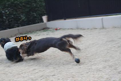 2008 03 15 お庭でひなたぼっこ blog08のコピー