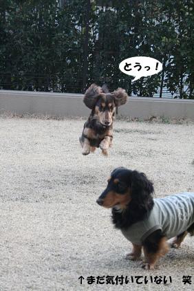 2008 03 15 お庭でひなたぼっこ blog09のコピー