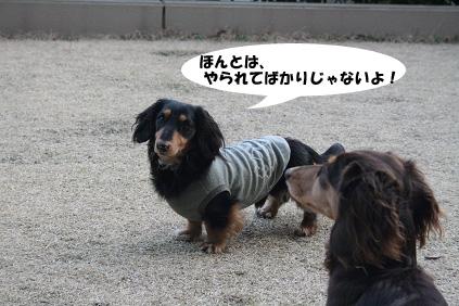 2008 03 15 お庭でひなたぼっこ blog10のコピー