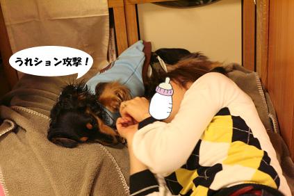 2008 03 16 たこ焼きパーティー blog09のコピー