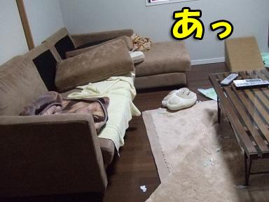 2008 03 25 チョッパー&ニコの日常 blog09のコピー