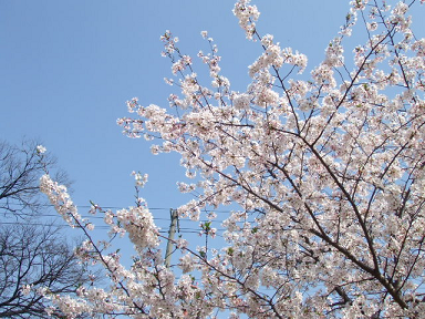 2008 04 06 花見 blog02