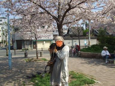 2008 04 06 花見 blog03