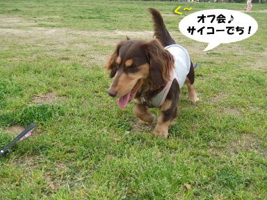 2008 04 13 春のオフ会 blog10のコピー