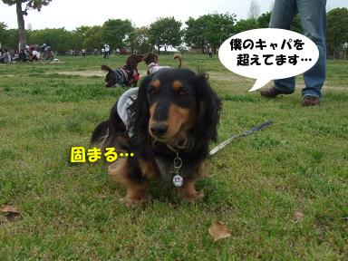 2008 04 13 春のオフ会 blog09のコピー
