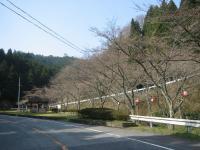 2008年さくら-1