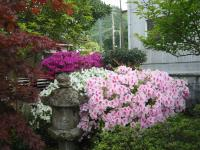 母の日 庭の花