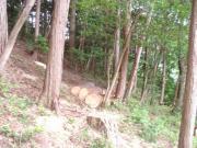不用材の伐採1