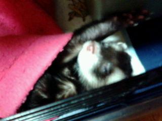 アクちゃん睡眠中