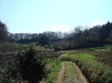 春の南山1