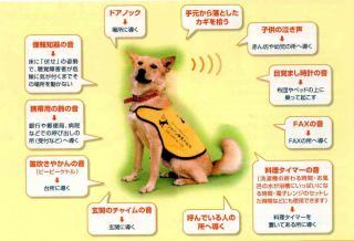 聴導犬の主な仕事