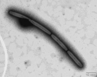 122℃で培養できた深海微生物