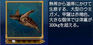 アカウミガメ・説明